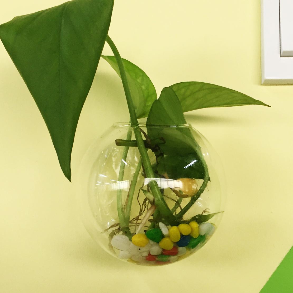 1pc Glass Hanging Plant Flower Terrarium Ball Vase Bottle Fish ...